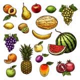 Vruchten natuurlijke verse organische schets vectorpictogrammen royalty-vrije illustratie