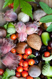 Vruchten van daling Stock Foto
