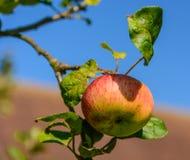 Vruchten van de Zomer Royalty-vrije Stock Fotografie