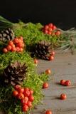 Vruchten van lijsterbes en kegels op groen mos Royalty-vrije Stock Afbeeldingen