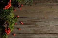 Vruchten van lijsterbes en kegels op groen mos Stock Foto