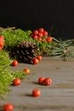 Vruchten van lijsterbes en kegels op groen mos Royalty-vrije Stock Foto