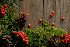 Vruchten van lijsterbes en kegels op groen mos Royalty-vrije Stock Foto's