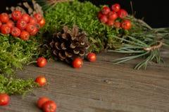 Vruchten van lijsterbes en kegels op groen mos Royalty-vrije Stock Fotografie