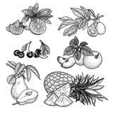 Vruchten Vector illustratie Royalty-vrije Stock Foto