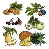 Vruchten Vector illustratie Stock Afbeeldingen