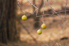 Vruchten Wallpaer Stock Afbeelding
