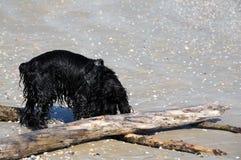 Våt hund på stranden Arkivfoto