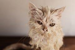 Våt katt Royaltyfri Bild