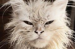 Våt kattunge Arkivfoto