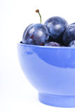 våta blåa mörka nya plommoner Royaltyfri Foto