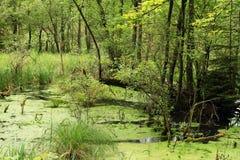 våtmark Arkivbilder