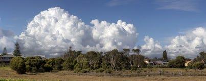 Våtmarker på det stora träsket Bunbury västra Australien i sen vinter Arkivbilder