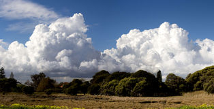 Våtmarker på det stora träsket Bunbury västra Australien i sen vinter Royaltyfri Foto