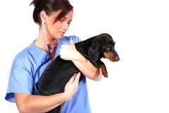 Vétérinaire avec le crabot Images libres de droits