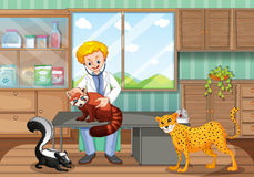 Vétérinaire guérissant les animaux sauvages dans la clinique Images libres de droits