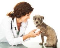 Vétérinaire Wrapping Injred Leg de chien Photographie stock libre de droits
