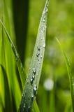 vått gräs Arkivfoto
