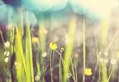 vått gräs Royaltyfri Fotografi