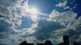 A vu l'oiseau dans le ciel et comprend, cela veulent voler Photo libre de droits