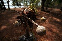 VUDU DA ILHA DE ÁSIA TIMOR-LESTE TIMOR LESTE JACO Foto de Stock