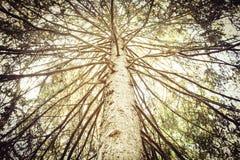 Vue à feuilles persistantes Image stock