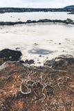 Vue à la lagune bleue en Islande toned image libre de droits