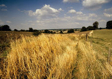Vue à travers l'horizontal agricole de champ de maïs Photographie stock