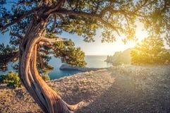 Vue élevée de beau paysage des roches à la côte et au genévrier vue de lentille de fisheye de perspective de déformation image stock