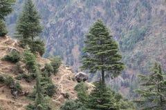 Vue étonnante d'arbre sur la grande montagne photo libre de droits