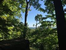 Vue étonnante de l'intérieur de la forêt profonde Photos libres de droits