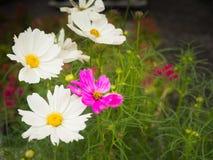 Vue étonnante de la floraison colorée dans le jardin Photographie stock libre de droits