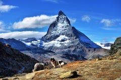 Vue étonnante de la gamme de montagne de panorama près du Matterhorn Image libre de droits