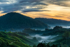 Vue étonnante de lever de soleil à la plantation de thé Photos stock