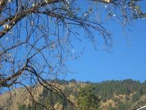 Vue étonnante de Nainital Images stock
