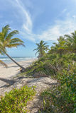Vue étonnante des plages près d'Itacare Photo libre de droits