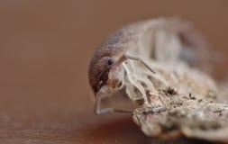 Vue étroite d'un insecte de pilule sur une feuille images libres de droits