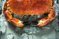 Vue étroite sur des claves de crabe Image stock