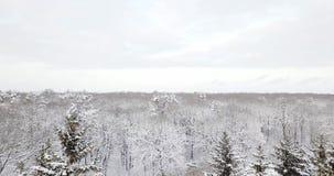 Vue aérienne au-dessus d'une forêt neigeuse couverte de neige Volez au-dessus du sapin neigeux congelé et de la forêt épaisse de  banque de vidéos