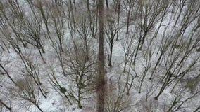 Vue aérienne cinématographique de la forêt d'hiver avec le chemin indiquant le fond industriel de la ville de Duisbourg avec banque de vidéos