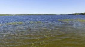 Vue aérienne - décollage au-dessus du lac avec des roseaux clips vidéos