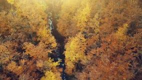 Vue aérienne d'automne de forêt de paysage d'or de crique banque de vidéos