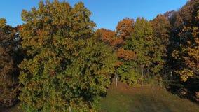 Vue aérienne d'orbite lente autour d'arbre en automne en retard clips vidéos