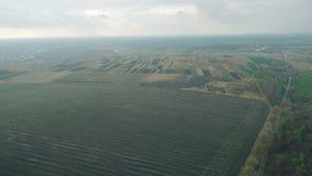 Vue aérienne d'un beau champ de la chute de blé banque de vidéos