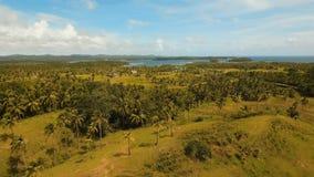 Vue aérienne d'un gisement de riz Philippines, Siargao Photo libre de droits