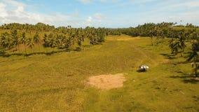 Vue aérienne d'un gisement de riz Philippines, Siargao Photographie stock