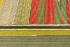 Vue aérienne d'un modèle des tulipes au printemps, la Hollande Image stock