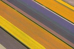Vue aérienne d'un modèle des tulipes au printemps, la Hollande Photographie stock