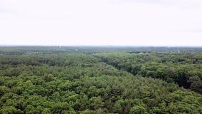 Vue aérienne d'une belle forêt près de Boston banque de vidéos