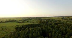 Vue aérienne d'une forêt épaisse en été banque de vidéos
